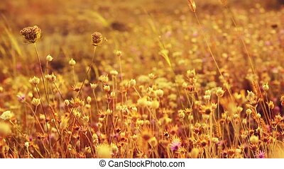 Golden sunlight on the meadow wild flowers, rural autumn background.