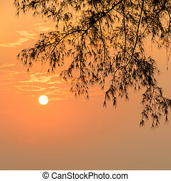 Golden sunrise with silhouette pine leaf