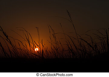 Golden Sunrise with Silhouetted Plants