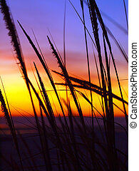 Golden Sunset at the Beach with Tall Grass in the Wind