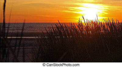 Golden Sunset at the Beach with Tall Grass