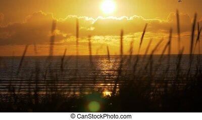 Golden Sunset Through Weed, Scotland Coastline, Real 200fps...