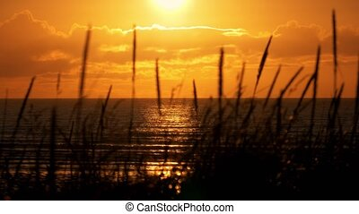 Golden Sunset Through Weed, Scotland Coastline - Graded...