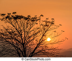 Golden sunset with silhouette tree