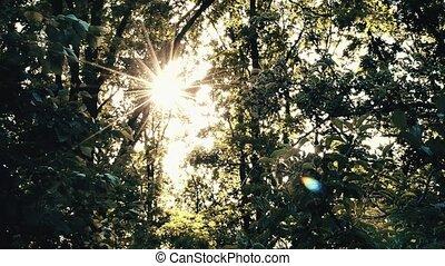 Golden sunshine with sun shining through tree foliage