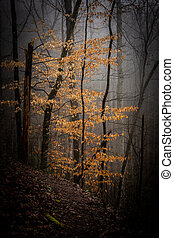 Golden Tree In Foggy Forest