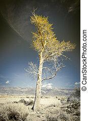 Golden tree in the desert