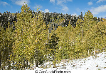 Golden trees and snow
