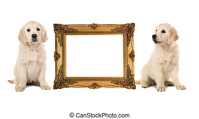 Golden victorian picture frame isolated on a white background with two golden retriever puppy's on the side with room for text inside the frame