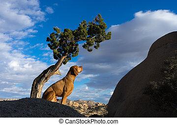 golden vizsla dog sitting under tree