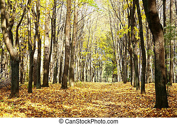 Golden walkway in sunny autumn october forest on blue sky