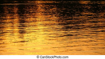 Golden water background