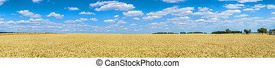 Golden wheat against blue sky background