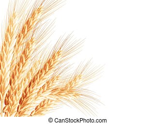 Golden wheat ear after the harvest. EPS 10 - Isolated bunch...