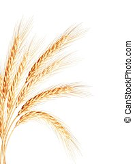 Golden wheat ear after the harvest. EPS 10 vector file...