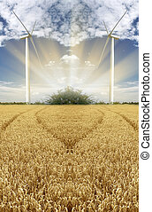 Golden wheat with wind turbine