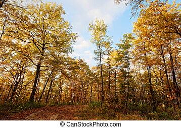 Golden woodland