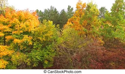 Golden yellow trees in the autumn forest. camera with a...