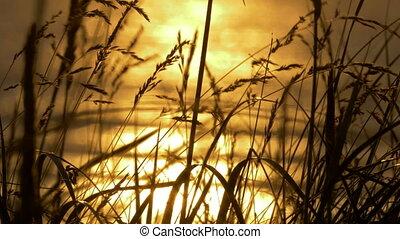 goldener sonnenuntergang, durch, unkraut, schottland, kuesten, -, gebürtig, version