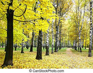 goldenes, herbst, stadt, park