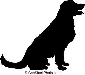 goldenes, silhouette, apportierhund