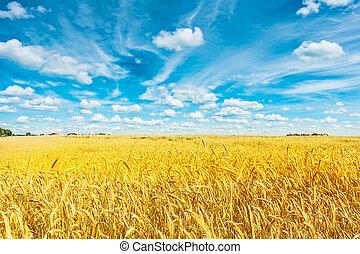 goldenes, weizen- feld, trüber himmel