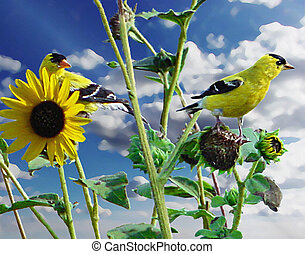 Goldfinch on SUnflower - Painting of goldfinch on a...