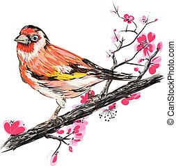 Goldfinch on the branch of blooming cherry blossom.