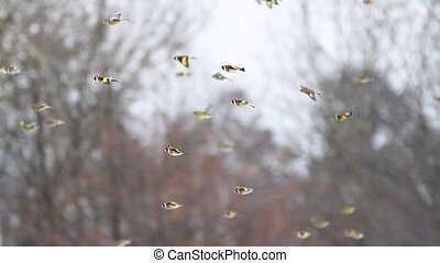goldfinches on a sunflower field in the city center, birds...