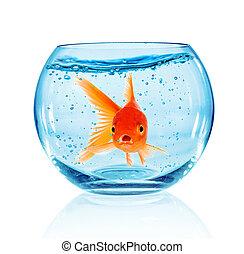 goldfisch, aquarium