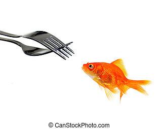 goldfisch, flachdrehen, ledig, gabeln