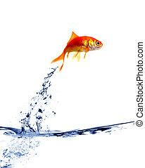 goldfisch, springende , heraus, von, der, wasser