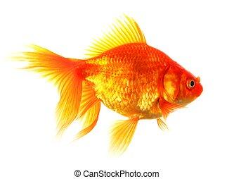 goldfisch