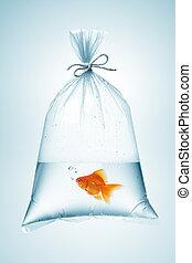 goldfisch, tasche