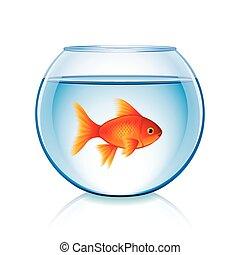 goldfisch, weißes, vektor, schüssel, freigestellt