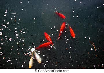 goldfish 4378