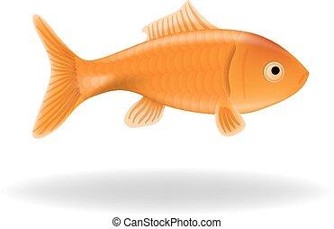 goldfish, aislado