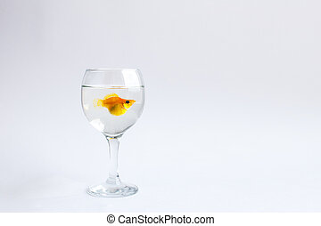 Goldfish alone swims in a glass wine glass