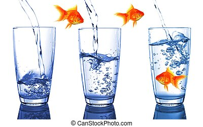growth - goldfish and glass showing financial growth concept