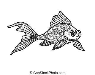 Goldfish aquarium fish sketch engraving vector illustration. T-shirt apparel print design. Scratch board imitation. Black and white hand drawn image.