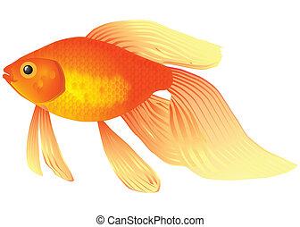 Goldfish aquarium - Goldfish for the content of akvariume. ...