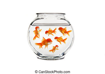 Goldfish Bowl With Many Fish Swimming - Overcrowded Gold ...