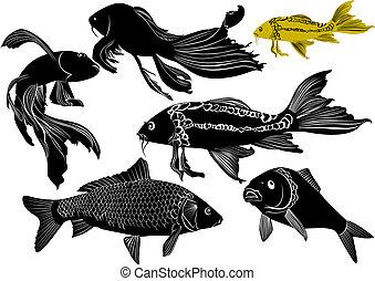 goldfish, carpa