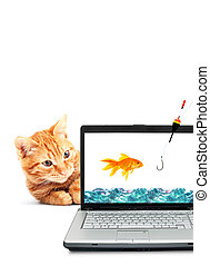 Goldfish, cat, laptop