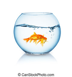 goldfish couple in a wavy fishbowl
