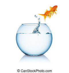 Goldfish couple jumps out of a fishbowl