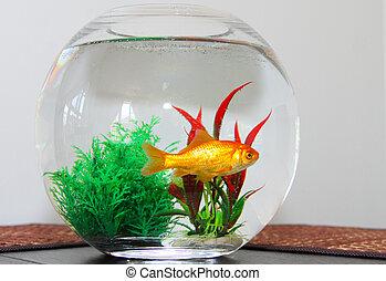 goldfish, em, tigela, aquário