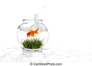 goldfish, em, um, tigela, com, capim