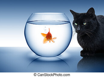 goldfish, en peligro, -, con, gato negro