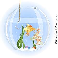 goldfish - in a glass aquarium goldfish surprise stares at a...